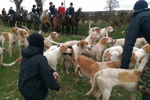 Hunt sabs with hounds